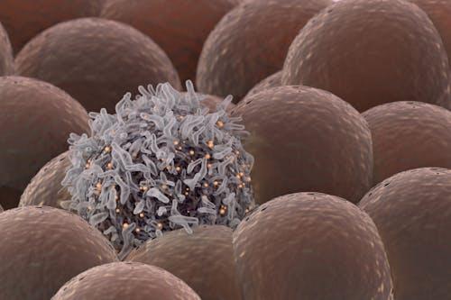 2000-2020: i principali risultati e successi contro il cancro. Il periodo 2006 - 2014