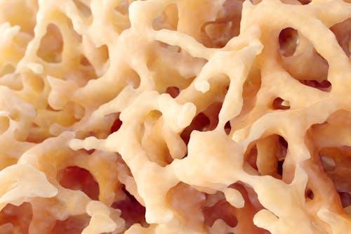 """Come il midollo osseo diventa """"complice"""" del tumore"""