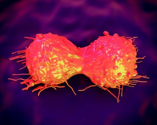 Tracciata la carta d'identità genetica dei tumori neuroendocrini del pancreas