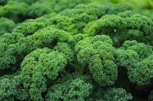 """Broccoli e cavoli per """"risvegliare"""" un potente gene anticancro"""