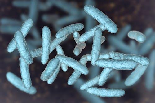 Una famiglia di batteri intestinali protegge dal tumore del colon-retto