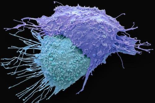 Un'anomalia genomica comune per il tumore dell'ovaio
