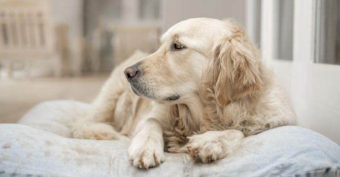 Curare i cani aiuta a curare gli umani