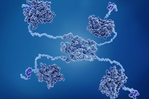 Scoperti nuovi, importanti dettagli sul dialogo tra cellule tumorali e microambiente