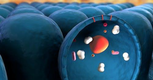 Puntare ai mitocondri per uccidere le cellule tumorali